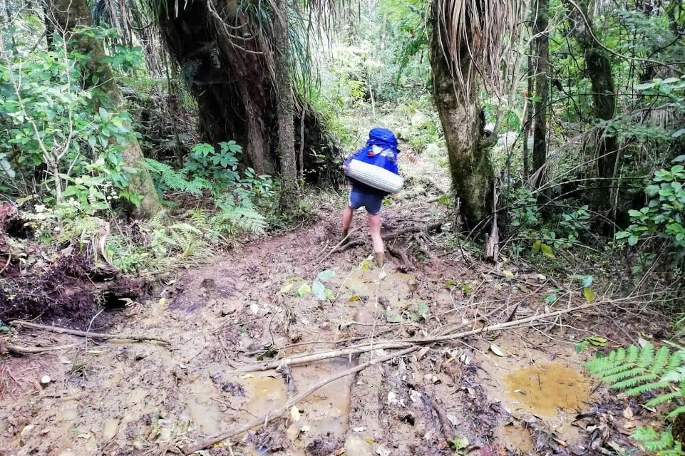 The Hardest Day of my Life – The Raetea Forest