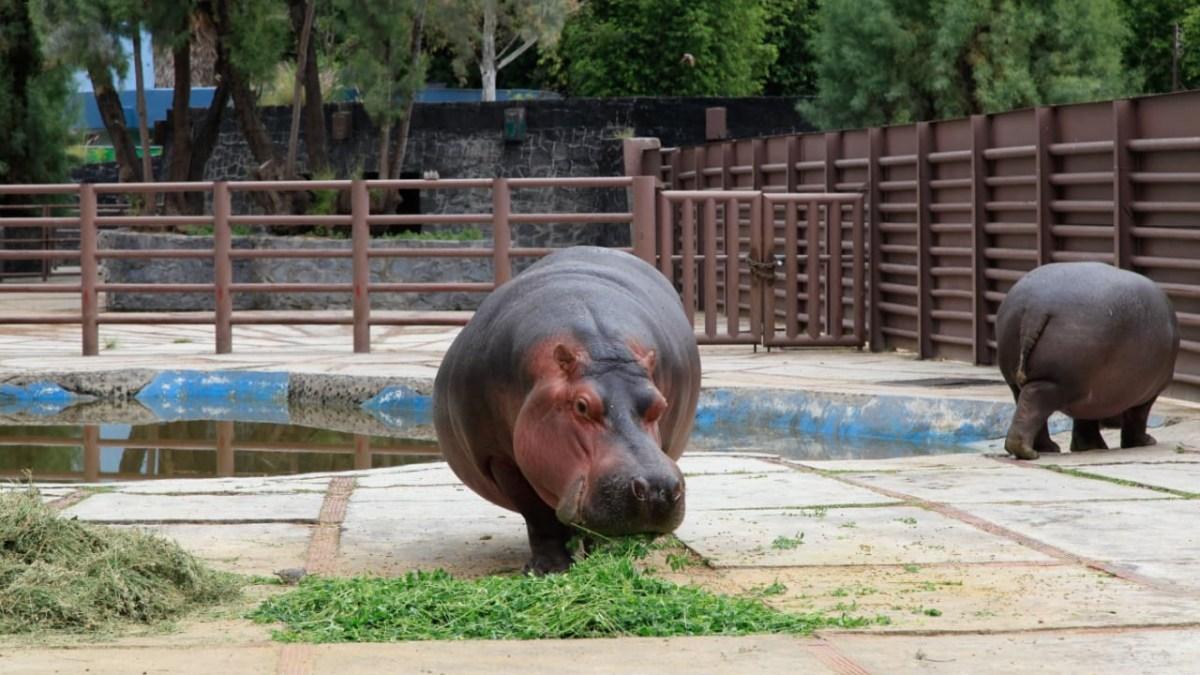 Exhorta la Dip. Salido Magos a SEDEMA a informar al Congreso sobre programas educativos y de capacitación en zoológicos de la CDMX