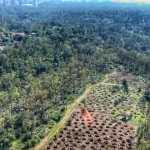 Pide Dip. Gabriela Salido al Gobierno informe detallado sobre la tala de árboles en Chapultepec