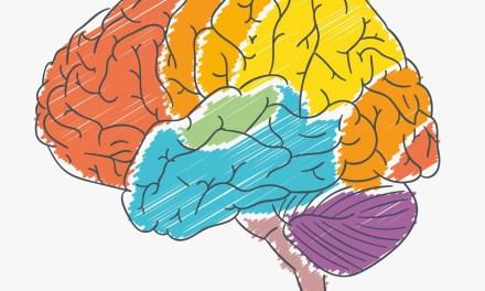 La ciencia del cerebro