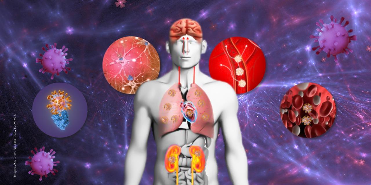 Las neurociencias y su relación con la COVID-19
