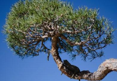 """""""Caminando entre bonsáis"""", un enfoque artístico y fotográfico para conocer la colección del Botánico"""