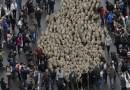 Madrid acogerá este domingo 22 la tradicional Fiesta de la Trashumancia