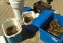 Intervenidos 370 cangrejos chinos y 1.600 cangrejos americanos en 4 supermercados asiáticos de Usera