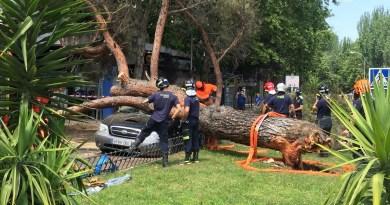 Una madre y sus 3 hijas salen ilesas tras caer un árbol sobre su coche en Fuencarral-El Pardo