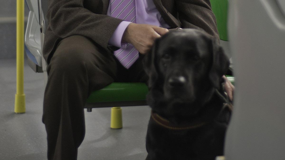 La EMT de Madrid permitirá subir a sus autobuses con perros