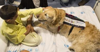 El Hospital 12 de Octubre pone en marcha una pionera terapia con perros para reducir el dolor y ansiedad en niños de la UCI