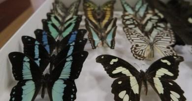Escarabajos, mariposas, polillas… la Casa de Campo acoge visitas y talleres gratuitos para todos los públicos