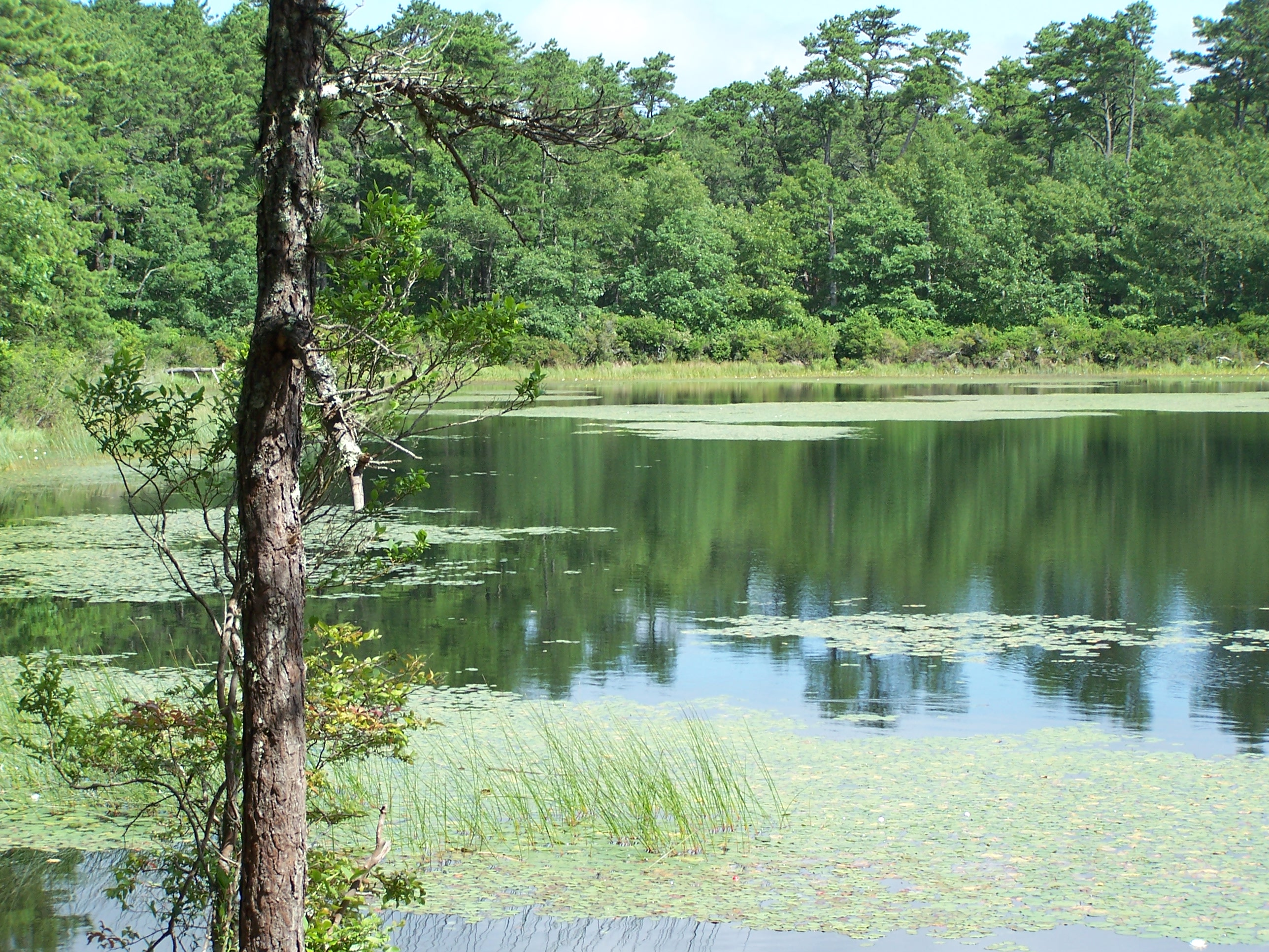 A kettle pond at Nickerson State Park in Brewster, MA