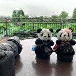 上野動物園の新パンダ舎を覗いてきたよ