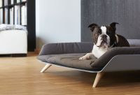 Letto dayBed Modern Dog Bed  Gadget Flow