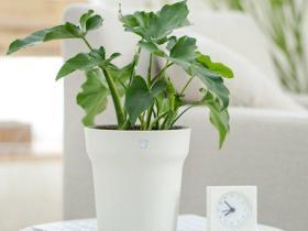 Smart Flower Pot Vorschau