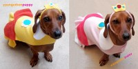 Super Mario Bros Series Dog Costume | Gadgetsin