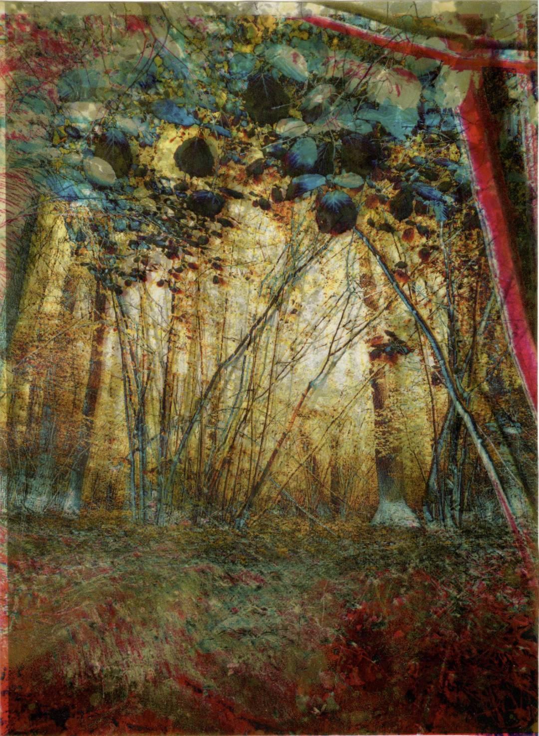 Les vibrations de la forêt #3 - copie