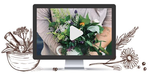 Online Kurse - Gänseblümchen & Sonnenschein