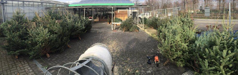 Weihnachtsbäume7