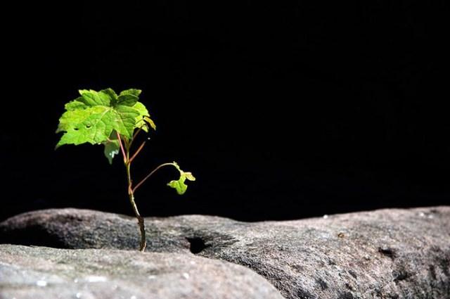 Crescere-athena