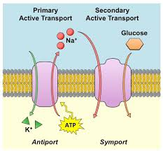 Transport mechanisms: Active and passive