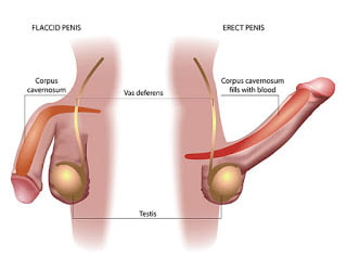 Erectile dysfunction | causes | signs | treatment