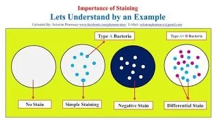 Staining techniques used in diagnostic microbiology