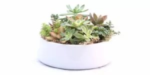 Read more about the article Top 3 Points You Need To Know About Caring For Succulents