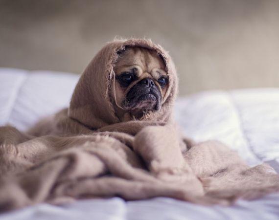 bed mattress sleep