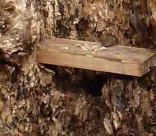 Im Baumstamm wohnt eine Maus