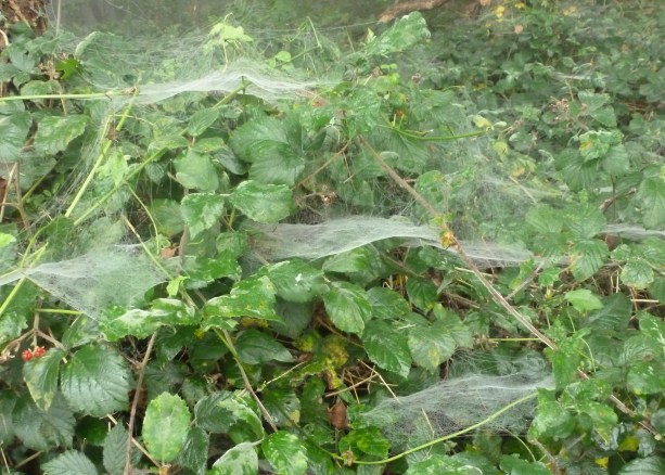 Spinnennetze im Wald
