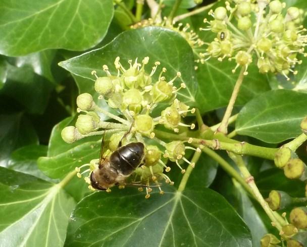 Ein Heer von Bienen wollen alle den süßen Hektar haben