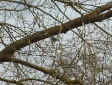 Ein Maischen im Ästegewirr
