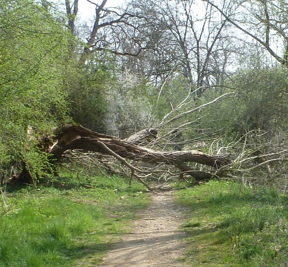 Umgestürzter Baum auf dem Wanderweg an der Ahr