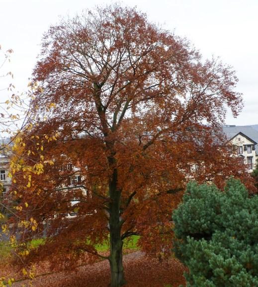 Der Herbstbaum in voller Pracht