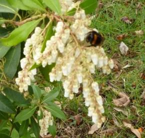 Schöne Blüten mit einer Hummel