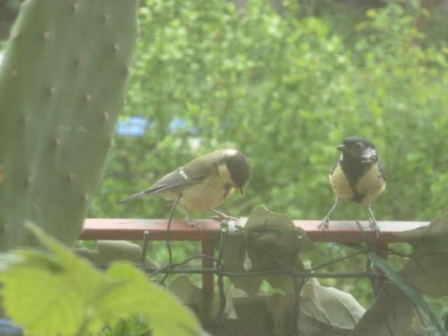 Die zwei neugierigen Maisen