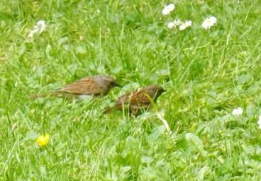 2 Vögel wer weiß wie sie heißen ???