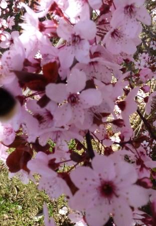 rosane Blütenbusch