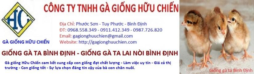 ga_giong_binh_dinh