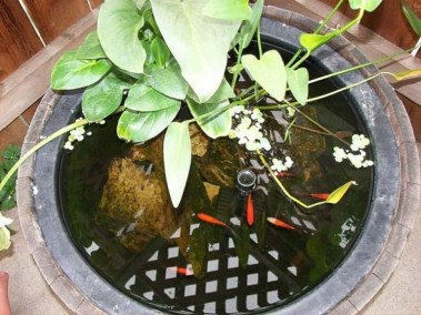 Stunning Backyard Aquarium Ideas 04