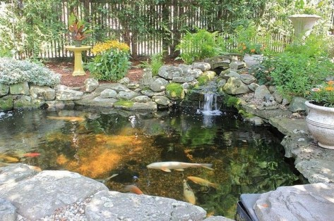 Stunning Backyard Aquarium Ideas 18