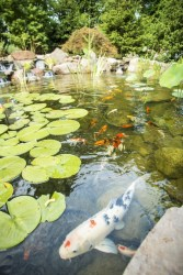 Stunning Backyard Aquarium Ideas 21