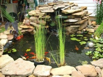 Stunning Backyard Aquarium Ideas 23