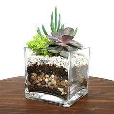 Fascinating Diy Terrariums Ideas To Try This Seasonl 08