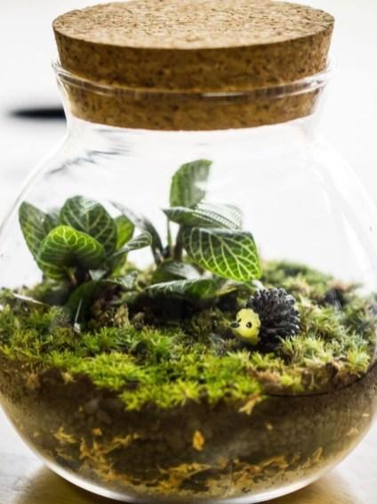 Fascinating Diy Terrariums Ideas To Try This Seasonl 37