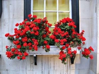 Unique Window Design Ideas With Plant That Make Your Home Cozy More 23