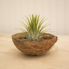 Perfect Diy Coconut Shell Ideas For Everyonen That Simple To Try 29