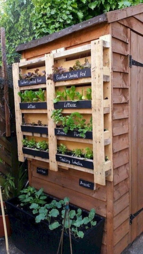 Rustic Small Backyard Design Ideas With Vertical Garden To Try Asap 37