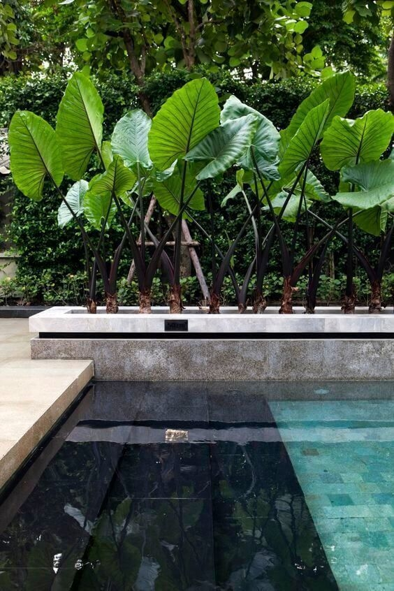 Surprising Tropical Pool Landscaping Design Ideas To Try Soon 16