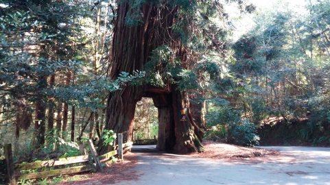 Tour Thru Tree, Klamath, CA 1