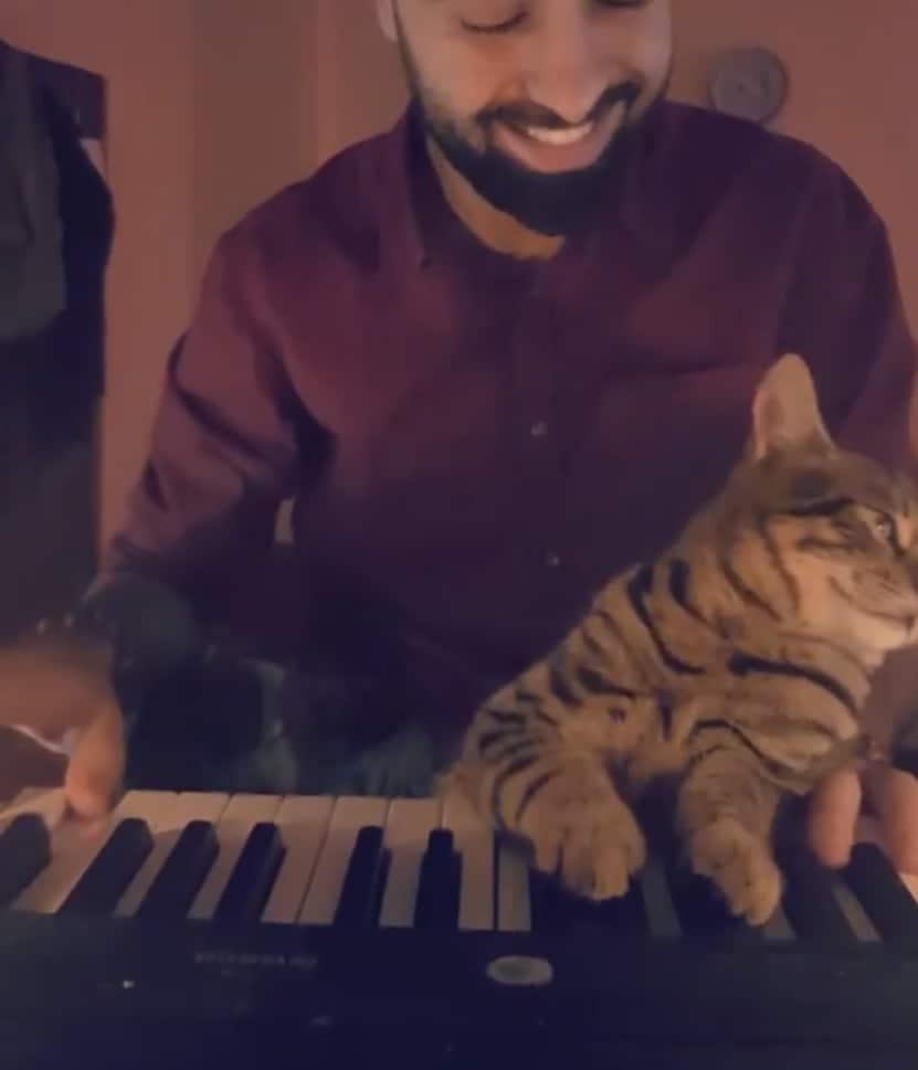 Un chat amoureux du piano
