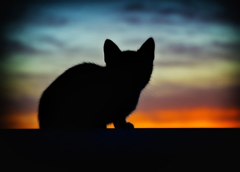 La chatte disparue, pourtant si proche de sa maîtresse…